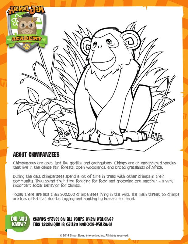 Chimpanzee Animal Jam Academy